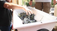 Stock Video Footage of Wine Grape Destemmer