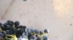 De-stemmer at Wine Grape Harvest Stock Footage