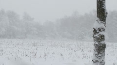 Rural scene, blizzard/snow storm - stock footage