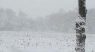 Rural scene, blizzard/snow storm Stock Footage