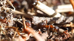 Ants Stock Footage