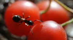 Ant Stock Footage
