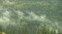 Evergreen forest trees Expire mist Forming local Clouds timelapse Stock Footage