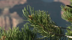Pinyon zoom out to Canyon Stock Footage