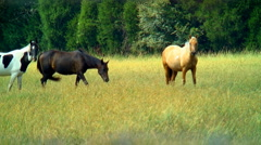 Horses look curiously Stock Footage