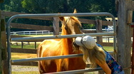Woman and horse 03 Stock Footage