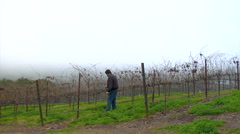 Winemaker surveys vineyard Stock Footage
