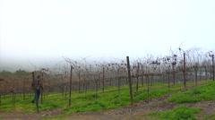 Winemaker surveys vineyard Stock Footage