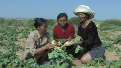 Women learn how to grow vegetables in Mongolia - stock footage
