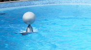 Dolphins with Ball Stock Footage