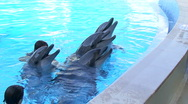 Dolphins and  Stock Footage