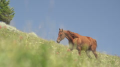 Wild Horses in Lush Meadow 72 Stock Footage
