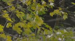 First autumn snow Stock Footage