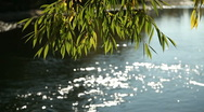 Tree on Riverbank 3 Stock Footage