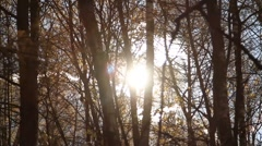 Sunlight flashing through forest trees - HD 1980 X 1020 Stock Footage