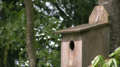 Common Starling, chick in nestbox being fed Stock Footage