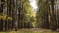 Tilt-up shot of Beautiful Autumn park with people taking a walk Stock Footage
