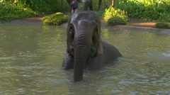 Elephants splash during bath Stock Footage
