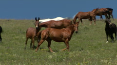 Free Ranging Horses 31 Stock Footage
