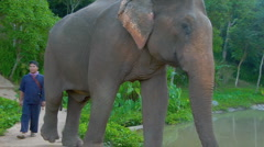 Elephant walks to waterhole in Thai jungle Stock Footage