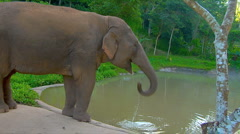 Elephant drinks at water hole Stock Footage