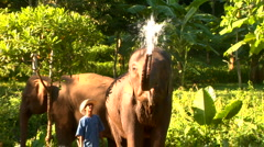 Elephant blows water to camera Stock Footage