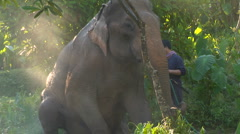 Elephant lies down for bath in Thai jungle Stock Footage