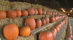 Ripe pumpkins for sale (2 of 3) Stock Footage