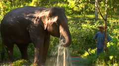 Elephant drinks with water hose in mouth Stock Footage