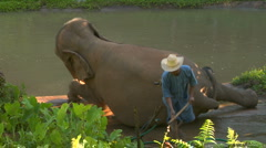 Elephant lies down for bath Stock Footage