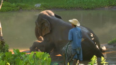 Man squirts off Elephant in Thai jungle with waterhose Stock Footage