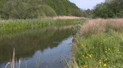 The danish river Skjern Aa Stock Footage