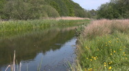 The danish river Skjern Aa Stock Footage