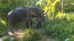 Man washes Elephant in Thai jungle Stock Footage