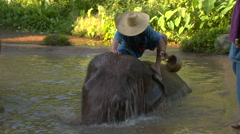 Man washes Elephant in jungle waterhole Stock Footage