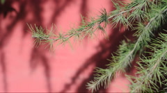 The shadow of the branches in the red walls china Stock Footage