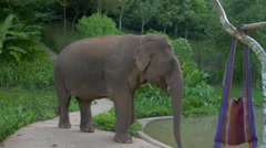 Asian Elephant approaches waterhole Stock Footage
