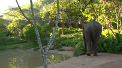 Elephant & Mahout approach waterhole Stock Footage