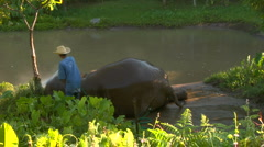 Elephant laying down washed by Mahout Stock Footage