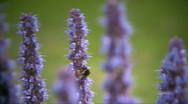 Bumble bee on flowers Stock Footage