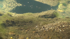P01265 Aquatic Life in Freshwater Stream - stock footage