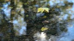 Stock Video Footage of floating Fallen Leaf