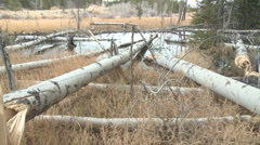 P01268 Beaver Pond and Felled Aspen Stock Footage