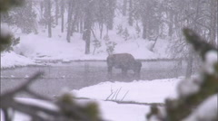 Bison River Snowfall 9 Stock Footage