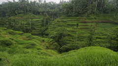 Rice Terrace with farmer in red in distance Stock Footage