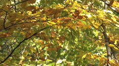 Autumn forests in october and november Stock Footage