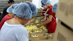 Small chicks in Factory Stock Footage