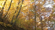 Stock Video Footage of autumn forests in october and november