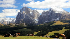 Cattle grazing in an Alpine meadow Seiser Aim, in the Italian Dolomites, Italy - stock footage