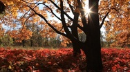 Stock Video Footage of Golden autumn